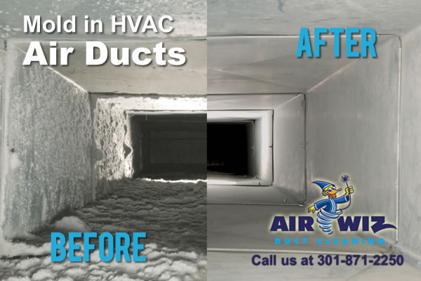 dryer vent cleaning Mold in HVAC Air Ducts - AirWiz Air Duct Cleaning Services Maryland DC and Virginia 2
